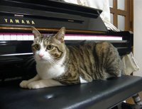 Tora_piano